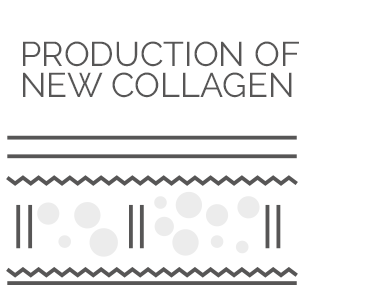 NEW COLLAGEN PRODUCTION